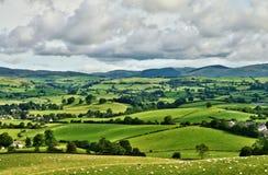 Hirtenszene des üppigen grünen englischen Ackerlands Stockbild