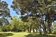 Hirtenszene von Neuseeland Stockbild