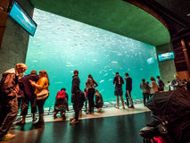 Hirtshals Aquarium. The Big Aquarium in the `Hirtshals Aquarium` in denmark Stock Photo