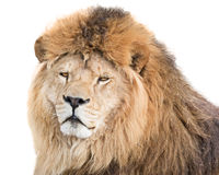 His majesty Stock Photography