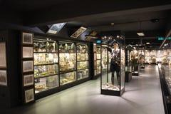 Hisart, Welt erster und nur lebendes Geschichtemuseums-Diorama Lizenzfreie Stockbilder