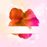 Hisbiscus flower and banner. Pink and orange hibiscus flower with banner and glowing circles Royalty Free Stock Photo