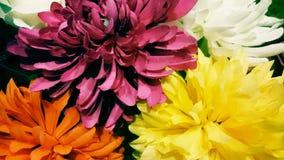Hisnande blommor, colourfull Arkivbilder