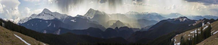 Hisnande panoramautsikt av storartade dimmiga Carpathian berg som täckas med den ever-green skogen på dimmig tyst morgon eller royaltyfri foto