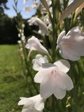 Hisnande vita blommor med härlig blå himmel i bakgrund Arkivfoton