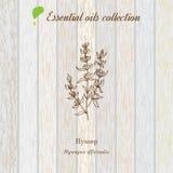 Hisopo, etiqueta del aceite esencial, planta aromática Imagen de archivo