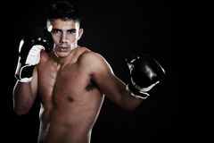 Hispanic boxer Royalty Free Stock Image