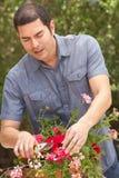 Hispanic Man Working In Garden Tidying Pots Stock Photo