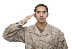 Hispanic Soldier salutes on white background Stock Image