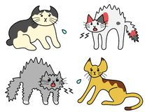 Hissing cats, scared cats. Fighting cats, hissing and being scared Stock Photography