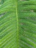 História da cor verde Imagens de Stock