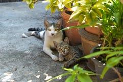 A história do gato Imagens de Stock
