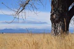 Histórias de passeio: Árvore que olha Rocky Mountains na distância foto de stock royalty free