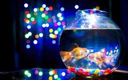 Histoire d'amour de poissons d'or Photos libres de droits