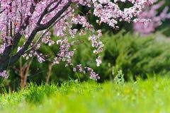 Histoire d'amour de printemps Photos libres de droits