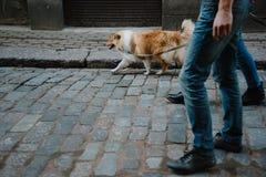 Histoire d'amour flânez famille et chien aimés Futurs maman et papa photo stock