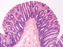 Histology of human tissue Royalty Free Stock Image