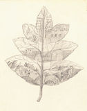 Historia av evolutionbarns teckning Royaltyfri Fotografi