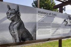 Historia de la domesticación de gatos con las edades fotografía de archivo libre de regalías