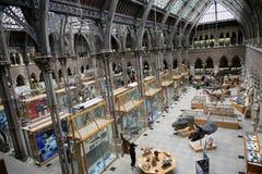 historia muzealny naturalny Oxford Zdjęcia Stock