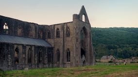 Historic Abbey Ruins In Countryside. Peaceful scene of old abbey building with cows grazing nearby stock video footage
