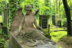 Historic Angel from the old Prague Cemetery, Czech Republic Stock Photography