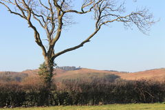 Historic and beautiful Bradgate park Stock Photography