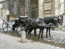 Typical Fiaker carriage in the old town of the austrian capital. A historic black-and-white Fiaker carriage with 2 black brown horses in the old town of the Stock Photos