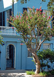 Historic Blue Home. A historic blue home in Charleston South Carolina with a complementary mimosa in full blossom with pink flowers Stock Photography