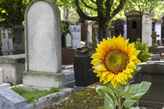 Historic cemetery in Paris, France Stock Images