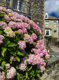 Historic center of Port Isaac with flowers in Cornwall Stock Photo
