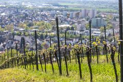Historic city bensheim in hesse germany with whine vineyards. The historic city bensheim in hesse germany with whine vineyards stock photo