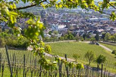 Historic city bensheim in hesse germany with whine vineyards. The historic city bensheim in hesse germany with whine vineyards royalty free stock photo