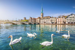 Historic city of Zurich with river Limmat, Switzerland. Historic city center of Zurich with famous Fraumunster Church and swans on river Limmat, Canton of Zurich Royalty Free Stock Images