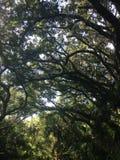 Historic coastal trees Stock Photo