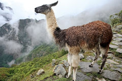 Historic Lost City of Machu Picchu - Peru royalty free stock photography