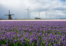 Historic and modern windmills with flowers Royalty Free Stock Photography