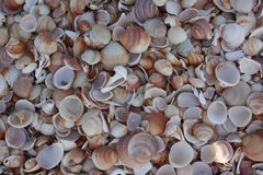 Sea shore from shells. In historic port Haifa Israel there`s a beautiful place on shore of Mediterranean sea where shores are fool from shells! It`s so beautiful Royalty Free Stock Photography