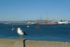 Historic ships docked at Hyde Street Pier, San Francisco Maritime National Historic Park. Seagull sits on a parapet in front of historic ships moored at Hyde stock photography