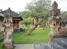 Historic Site, Archaeological Site, Ancient History, Tree