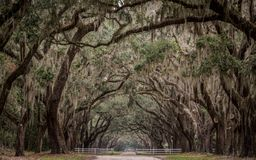 Historic Site with Long Tunnel of Live Oak Royalty Free Stock Photos