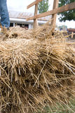 Historic threshing stock photo