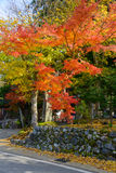 Historic Village of Shirakawa-go in autumn Shirakawa-Hachiman shrine Stock Images