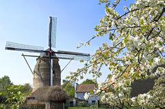 Historic Windmill Gronsveld And Blossom Tree Royalty Free Stock Images