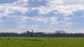 Historic windmill pasture Netherlands stock footage