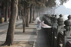 Historical in Beijing stock image