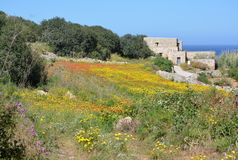 Historical build with meadow (Malta). Colorful field with poppies and yellow flowers. Way to Selmun Bay. Mediterranean Sea on horizonth Stock Image