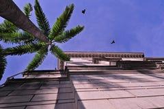 Historical building , birds Royalty Free Stock Photos