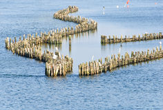 Historical herring weir. In the Schlei at Kappeln Royalty Free Stock Photos