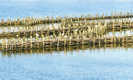 Historical herring weir Royalty Free Stock Photos